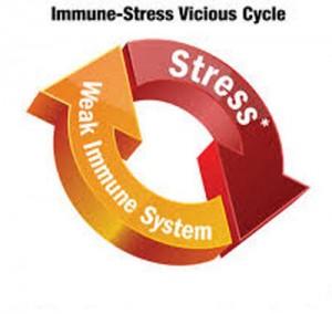 stress-imune-system